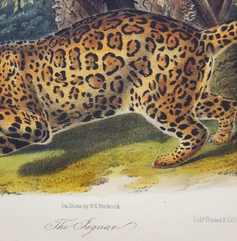 The Jaguar For Sale 6