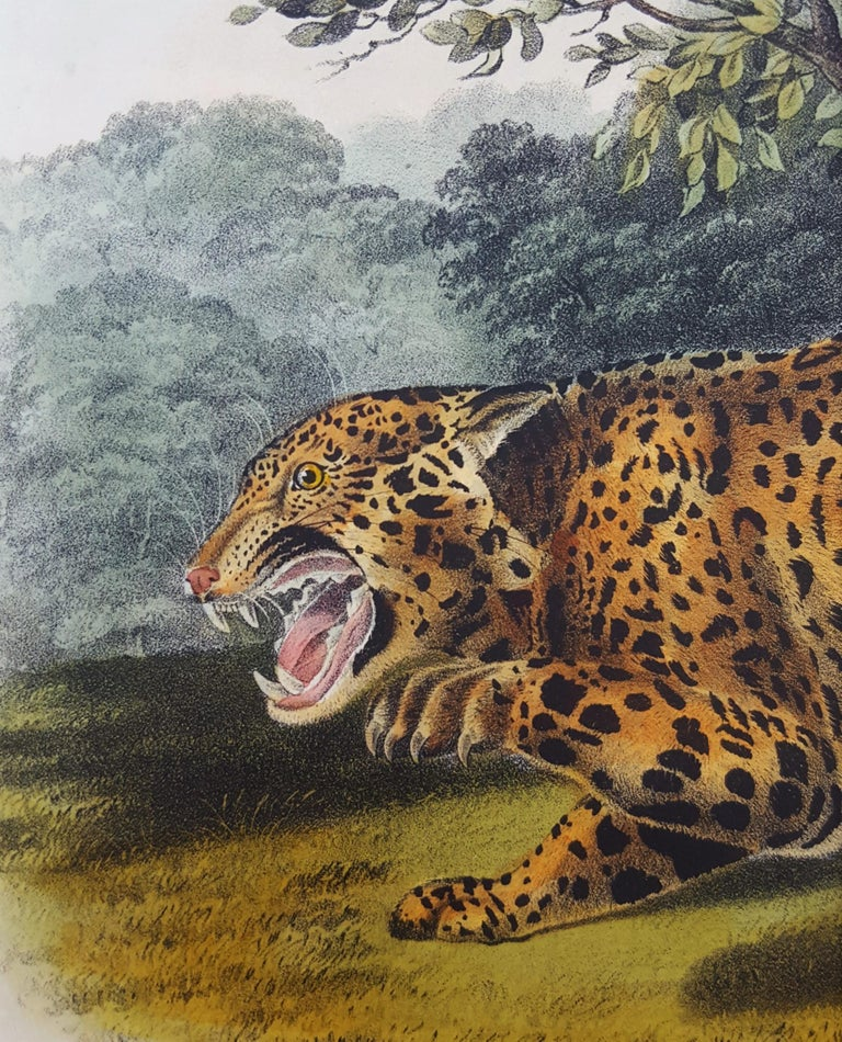 The Jaguar For Sale 7