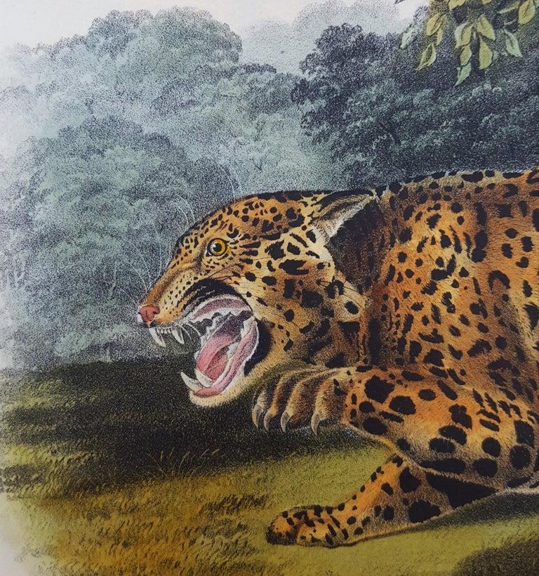 The Jaguar For Sale 8