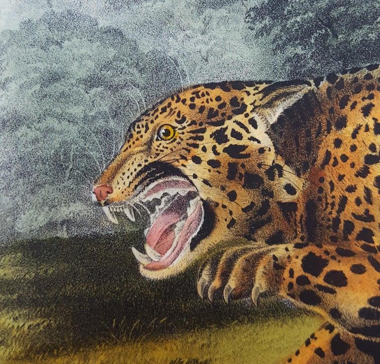 The Jaguar For Sale 9