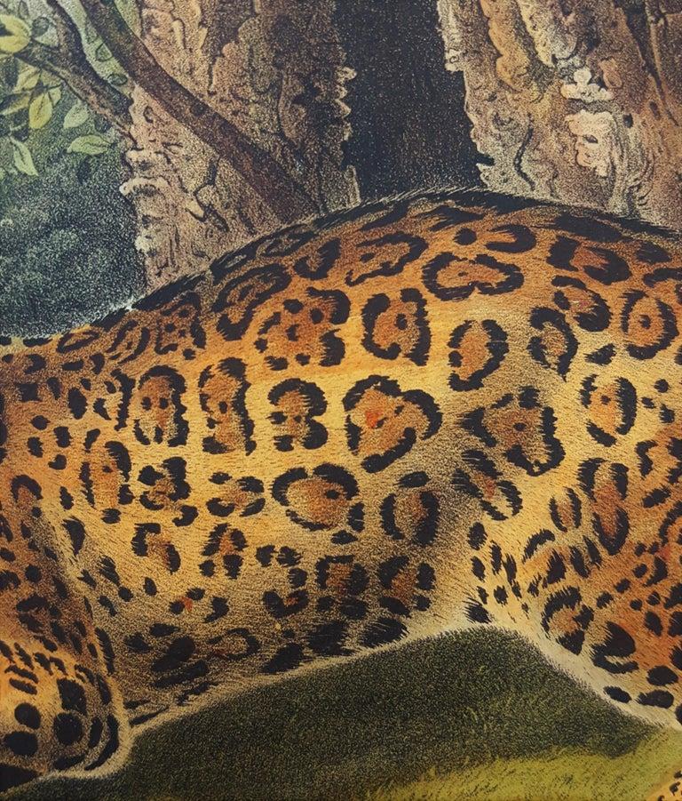 The Jaguar For Sale 10