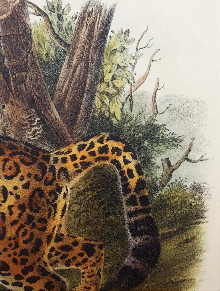The Jaguar For Sale 11