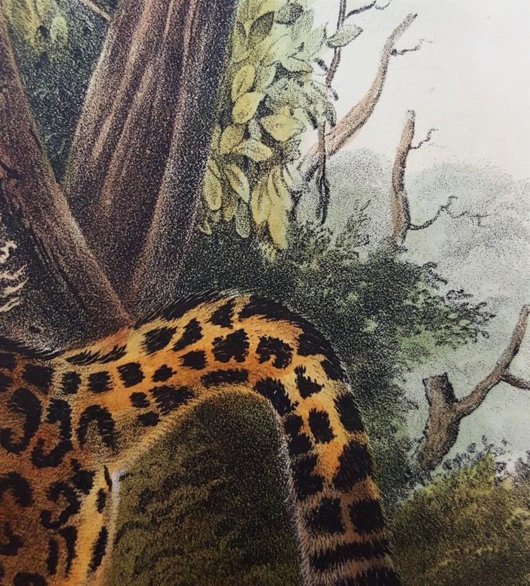 The Jaguar For Sale 12