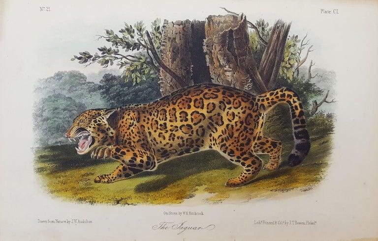 The Jaguar - Print by John James Audubon