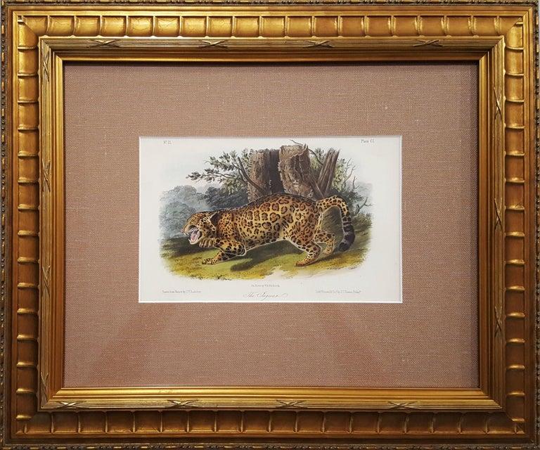 The Jaguar - Victorian Print by John James Audubon