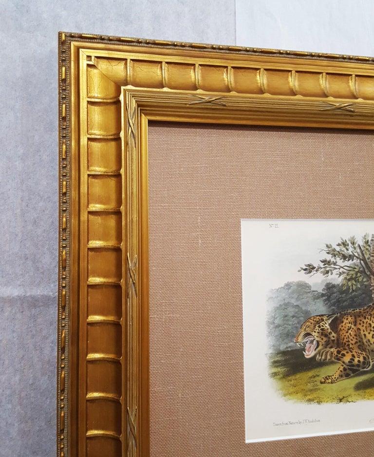 An original hand-colored lithograph on wove paper after American artist John James Audubon (1785-1851) titled