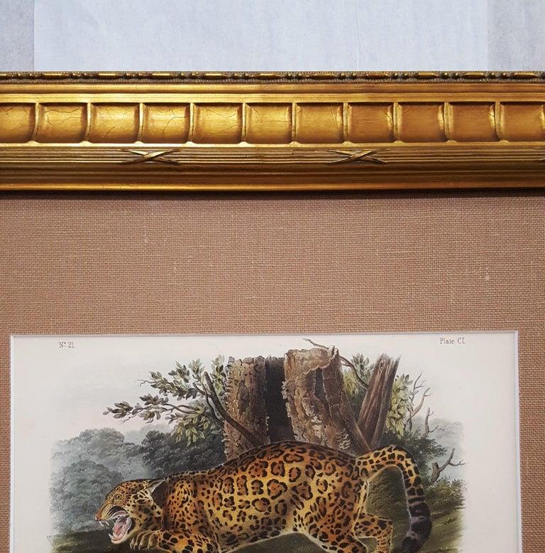 The Jaguar For Sale 3