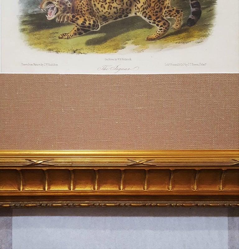 The Jaguar For Sale 4