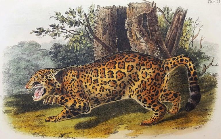 John James Audubon Animal Print - The Jaguar