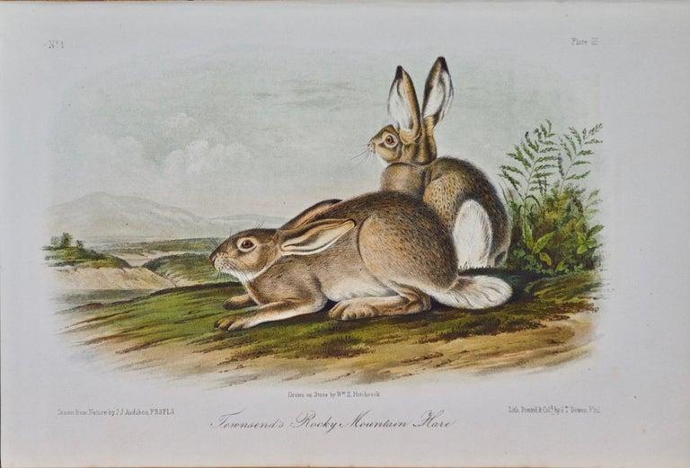 "John James Audubon Animal Print - ""Townsend's Rocky Mountain Hare""an Audubon Hand Colored by J.T. Bowen Lithograph"