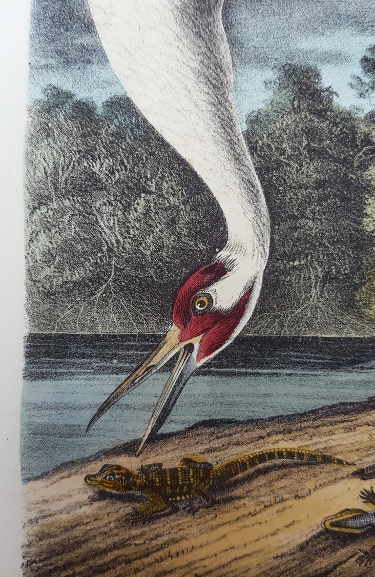 Whooping Crane For Sale 6