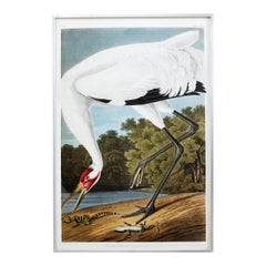 Whooping Crane Plate #226 Havell Oppenheimer Edition