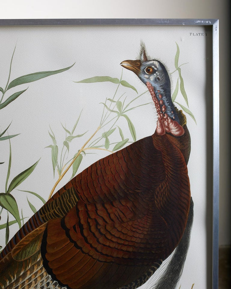Wild Turkey Plate #1 Havell Oppenheimer Edition For Sale 1