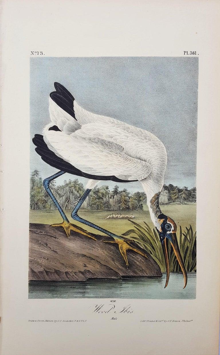 Wood Ibis - Print by John James Audubon
