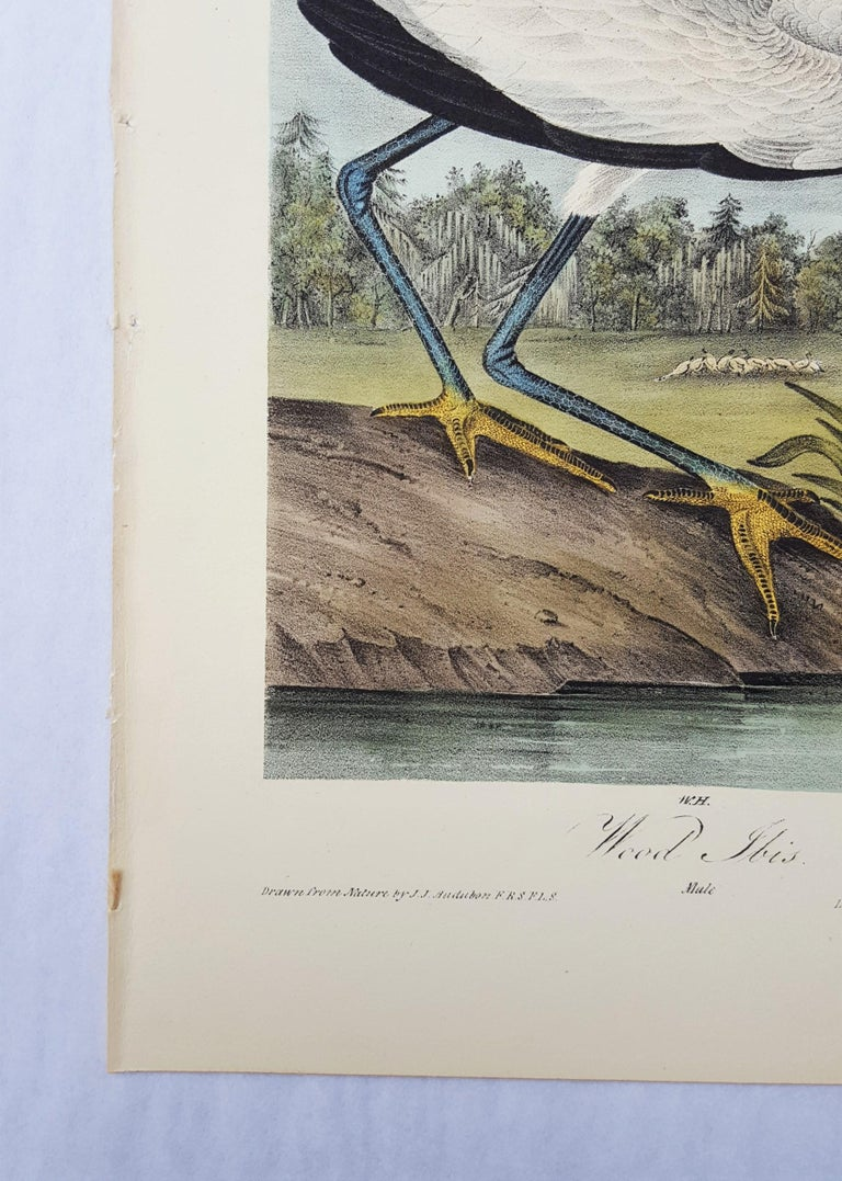 Wood Ibis - Victorian Print by John James Audubon