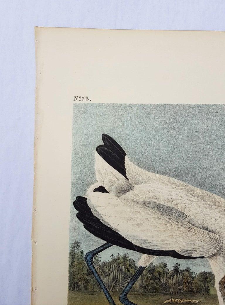 Wood Ibis - Gray Animal Print by John James Audubon
