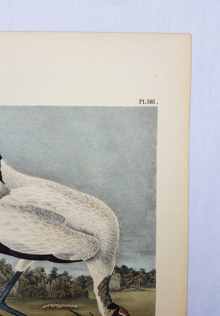 An original hand-colored lithograph on wove paper by American artist John James Audubon (1785-1851) titled