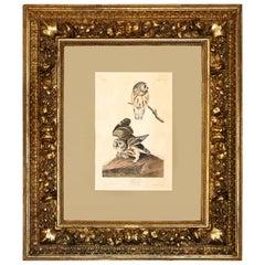 "John James Audubon ""The Little Owl,"" 1834 Havell Edition in Baroque Frame"