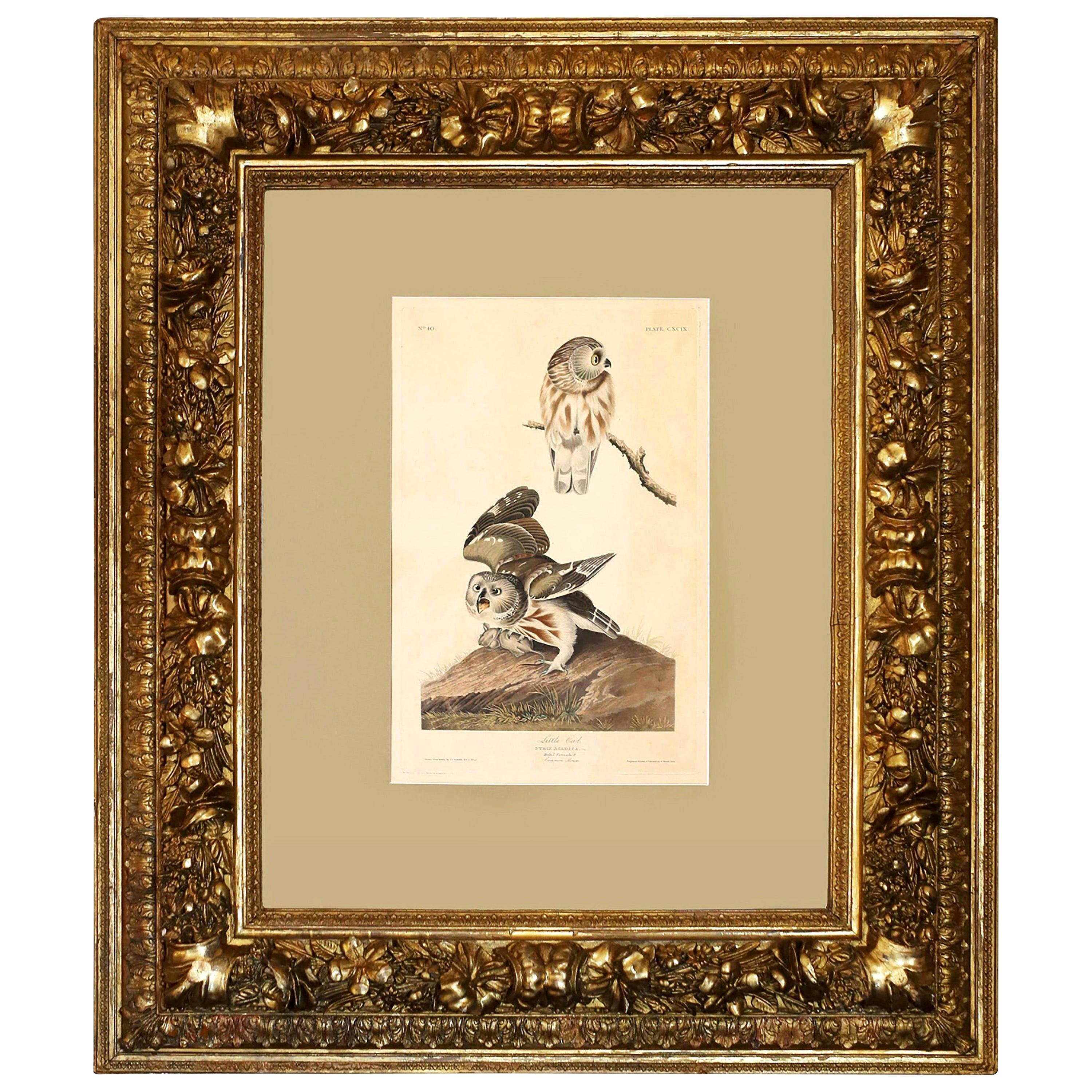 "John James Audubon ""The Little Owl,"" 1834 Havell Edition in Baroque Frame"