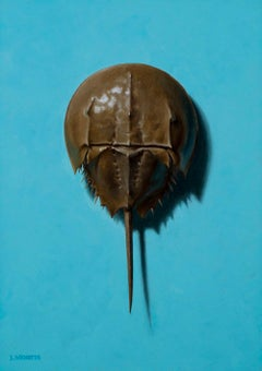 Horseshoe Crab on Blue