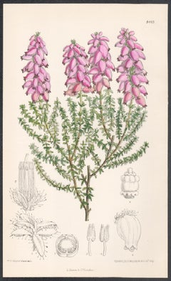 Four antique botanical flower lithograph prints