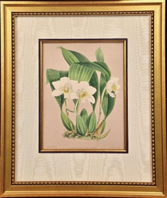"""Framed 19th C. Hand-Colored Engraving of """"Lycaste Harrisoniae"""" Orchids by Fitch"""