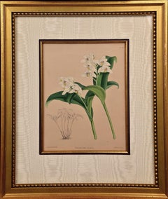 """Framed 19th C. Hand-Colored Engraving of """"Trichosma Suavis"""" Orchids by J. Fitch"""