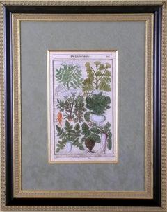 Root Vegetables  (Carrot, Turnip, Radish, Parsnip, etc.)