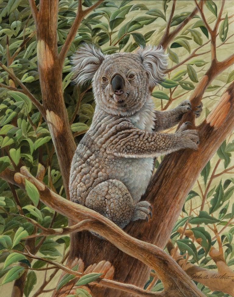 John Ruthven Animal Art - Cute Koala Bear Australia,  Photorealism