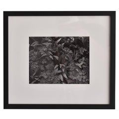 John Szarkowski, Silver Gelatin Print Black and White Photograph Nature, 1952