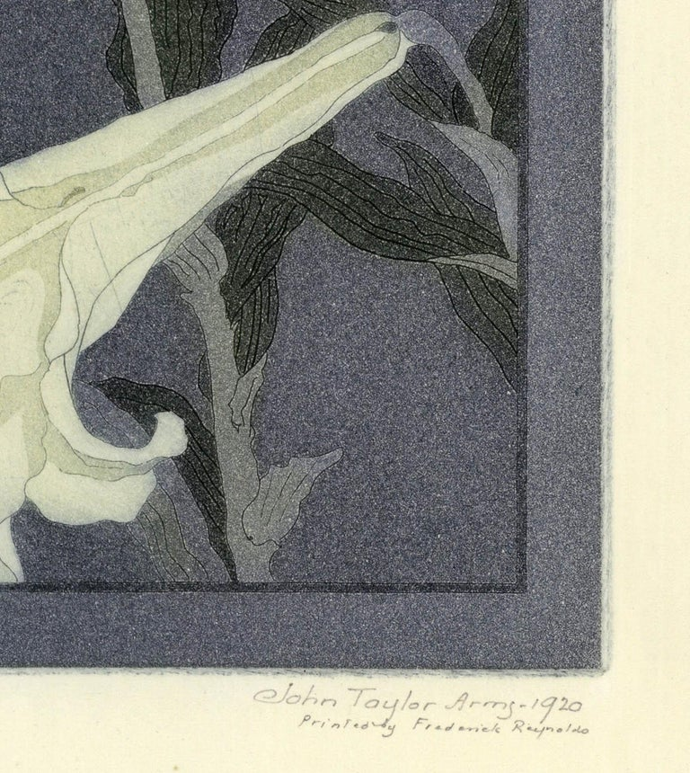 Lily - Print by John Taylor Arms