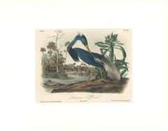 Louisiana Heron by Audubon