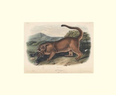The Cougar by Audubon