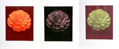 Set of 3 Dahlia Floral Photographs by Jonathan Singer
