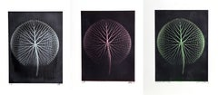 Set of 3 Giant Amazon Waterlily Floral Photographs 2 by Jonathan Singer
