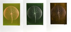 Set of 3 Giant Amazon Waterlily Floral Photographs 3 by Jonathan Singer