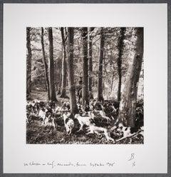 La chasse au cerf, Normandie, France, September 1975