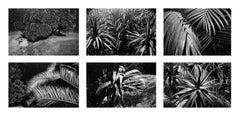Gardens (2) - Coffret Prestige # 9 , 1979 - Minimalist Black & White Photography