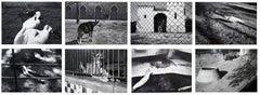 Parc Zoologique - Coffret Prestige # 3 - 1980, Minimalist Black and White Photog