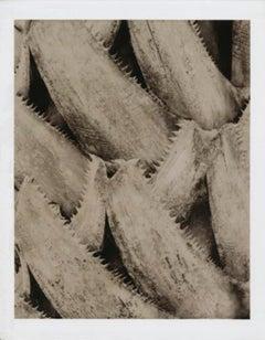 """""""Gebang Palm (Detail)"""", Miami, FL, 2003"""