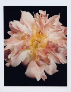 """Martha Stewart Living Magazine, Peony"", New York, NY, 2000"