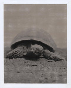 """Tortoise"", Joshua Tree, California, 2005"