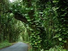 Paradise Drive, Big Island, Hawaii