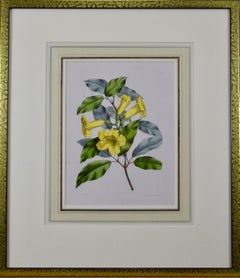 Hand-colored 1834 Joseph Paxton Botanical Engraving of Yellow Trumpet Flowers
