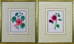 A Pair of 19th C. Hand Colored Botanical Engravings of Flowers by Joseph Paxton