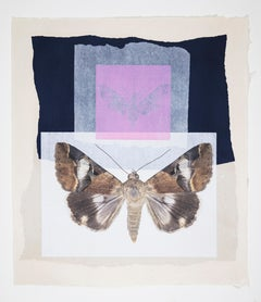 Contemporary Monotype Collage Butterfly Moth Nature Print Framed Pink Blue