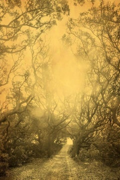 Joyce Tenneson, Cumberland Two, 2016 [trees]