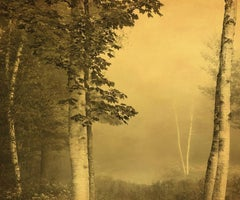 Joyce Tenneson, Five Birches in Fog, 2016 (trees)