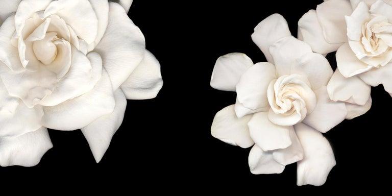 Joyce Tenneson, Gardenias, 2018 - Photograph by Joyce Tenneson