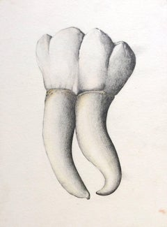 Almas y Dientes: Panel 24 (Graphite Drawing of Tooth on Paper Mounted on Panel)
